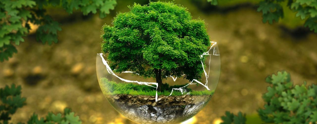 Bild: Baum