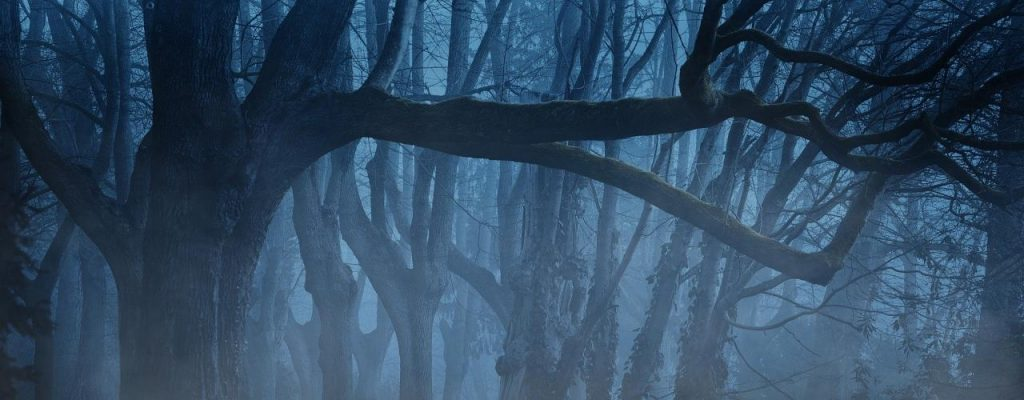 Bild: Bäume