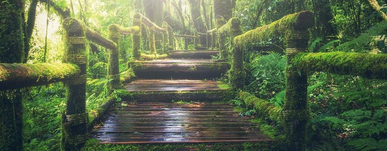 Bild: Holztreppe